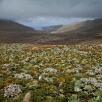 Lo studio italiano: le aree selvagge dimezzano l'estinzione delle specie