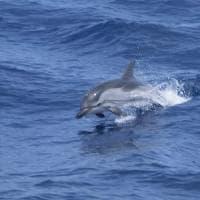 Raddoppiati gli avvistamenti di cetacei nei mari italiani