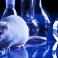 Manifesto degli scienziati a difesa della sperimentazione animale