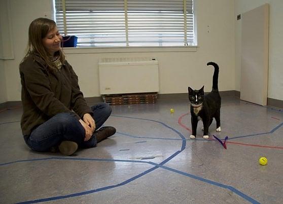 L'attaccamento dei gatti agli umani