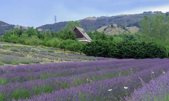 Tra Basilicata e Calabria, ecco il Pollino: più che un parco un luogo dell'anima