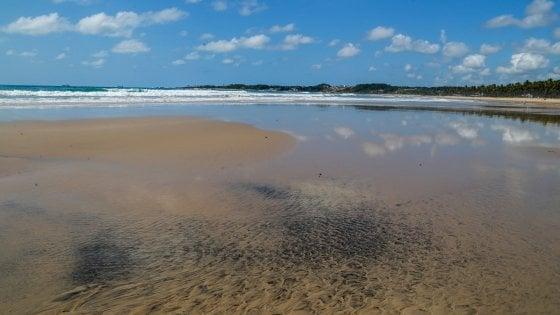 Brasile, macchie di petrolio sulla costa: il catrame soffoca uccelli e tartarughe