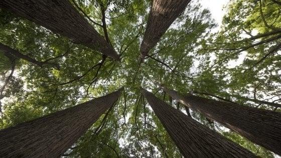 Metà degli alberi europei sono a rischio estinzione