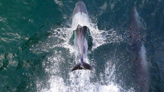 """TripAdvisor, la svolta pro-cetacei. """"Stop alla vendita di biglietti di attrazioni con balene e delfini"""