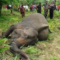 La strage silenziosa degli elefanti nel mondo