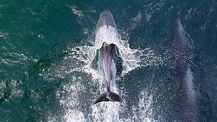 La svolta pro-cetacei
