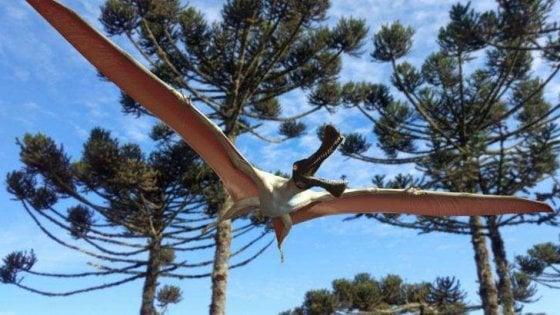 Scoperto in Australia il fossile di un nuovo pterosauro