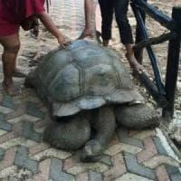 """È morta Alagba, la tartaruga di 344 anni sacra e """"curativa"""""""