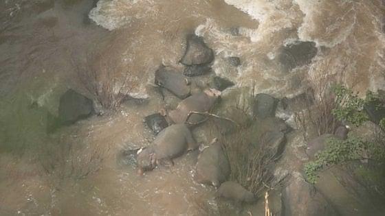 Thailandia, cucciolo annega e 5 elefanti muoiono per salvarlo. I due in pericolo, tratti in salvo