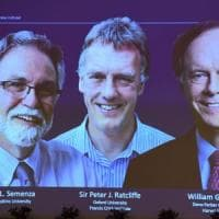 Nobel per la Medicina a William Kaelin, Peter Ratcliffe e Gregg Semenza. Studiano come le...
