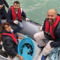 Pesaro, il salvataggio dei tartarughini