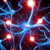 Vita e morte dei neuroni, adesso è più chiaro come avviene