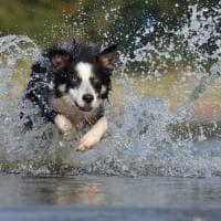 A ciascun cane il suo carattere: il comportamento ha anche una base genetica
