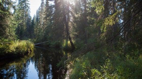 Russia, una foresta grande come il Belgio diventa area protetta
