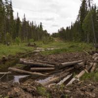 La foresta di Dvinsko-Pinezhsky diventa area protetta