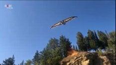 Il volo del nibbio: la macchina volante di Leonardo spiega le ali