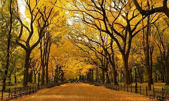 New York. Il Central Park si rifà il look. 150 milioni per riqualificare l'Harlem Meer