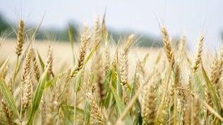 Così l'agricoltura riparte da uno smartphone: lunedì 21 il nuovo Talks on TomorrowIscriviti online all'evento