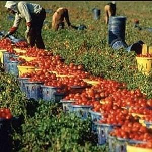 """Braccianti agricoli, """"La cattiva stagione"""": rapporto sulle condizioni di vita e di lavoro dei lavoratori nella Capitanata"""