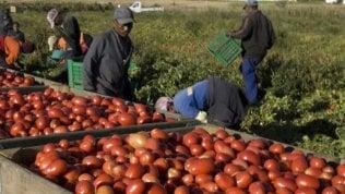 Braccianti agricoli, La cattiva stagione: rapporto sulle condizioni di vita e di lavoro dei lavoratori nella Capitanata