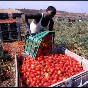 Braccianti agricoli, quei 7.000 migranti a basso costo che raccolgono un terzo della produzione nazionale