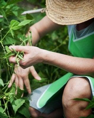 Trattori a energia solare e tecnologie per le piccole aziende: l'agricoltura del futuro è già qui