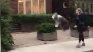 Il cane salta dalla gioia: la passeggiata è uno spasso