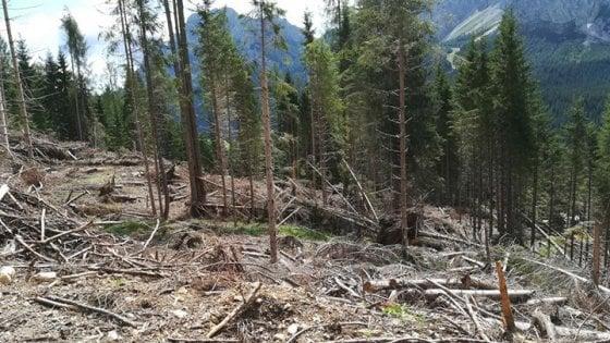 Riforestazione in crowdfunding, 16.500 alberi adottati nelle aree della tempesta Vaia
