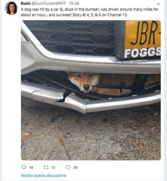 Investito ma illeso: l'incredibile storia del cane che ha viaggiato nel vano motore