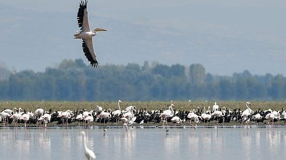 Quell'eden salvo grazie alla Cortina di ferro. Belasica un'oasi di biodiversità nei Balcani della Guerra Fredda