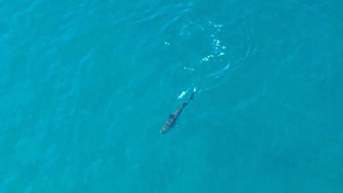 "Contea Di Honolulu Hawaii hawaii, chiuse le spiagge di maui: ""avvistati diversi squali"