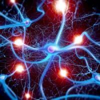 Cnr: scoperto un nuovo meccanismo regolazione nascita delle sinapsi