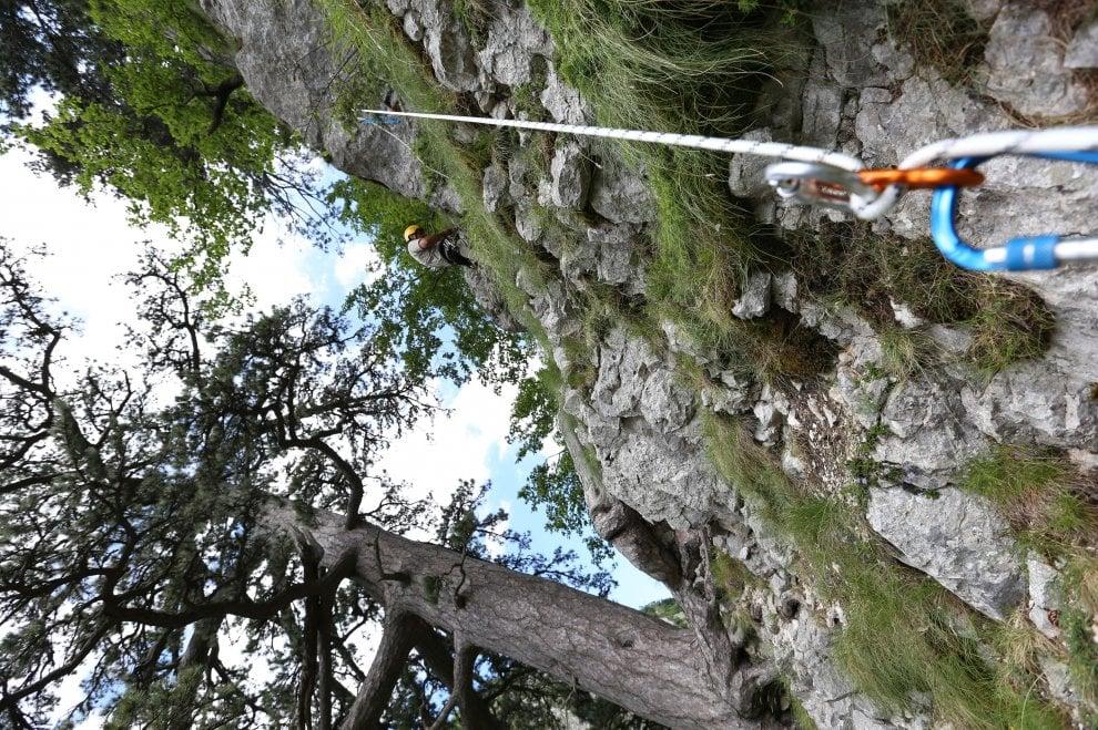 Fara di San Martino, il pino nero ha novecento anni