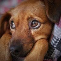 Non gridate al vostro cane: non fa bene alla sua salute mentale