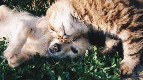 Cani, gatti e diabete: 280mila gli amici a quattro zampe che ne soffrono