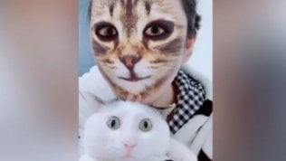 Se il padrone si trasforma in gatto: i mici reagiscono così all'app
