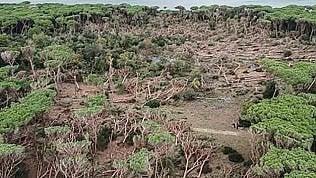 Feniglia, tromba d'aria abbatte mille pini nella riserva naturale