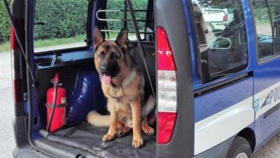 Risultato immagini per cane antidroga