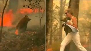 Il koala è nel bosco in fiamme: donna si lancia e corre a salvarlo