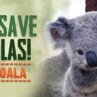 L'Australia brucia e i koala muoiono in massa: raccolti 1 milione di dollari per salvarli