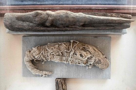 Mummie di leoni, gatti, serpenti e coccodrilli: l'eccezionale ritrovamento a Saqqara
