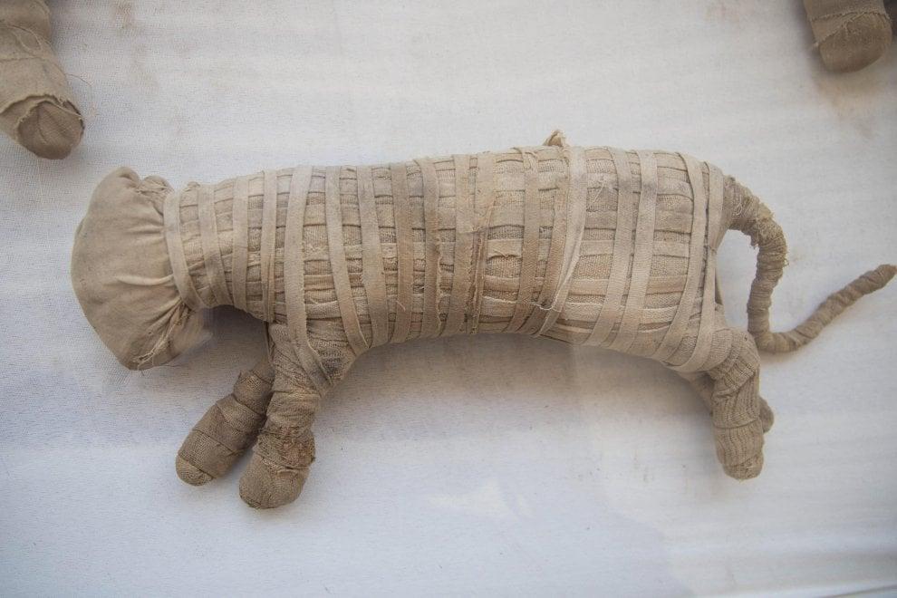 Leoncini e altre mummie, sacrifici dell'antico Egitto