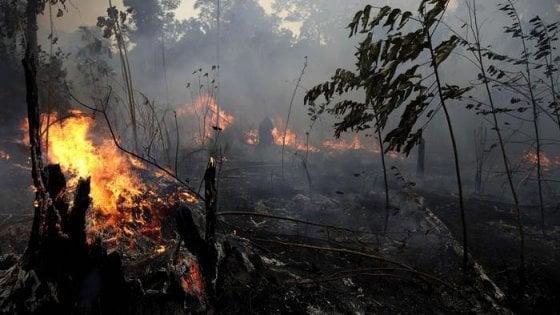 """Amazzonia: appiccavano roghi, arrestati 4 volontari Ong. Ma la sinistra accusa: """"Montatura per dare ragione a Bolsonaro"""""""