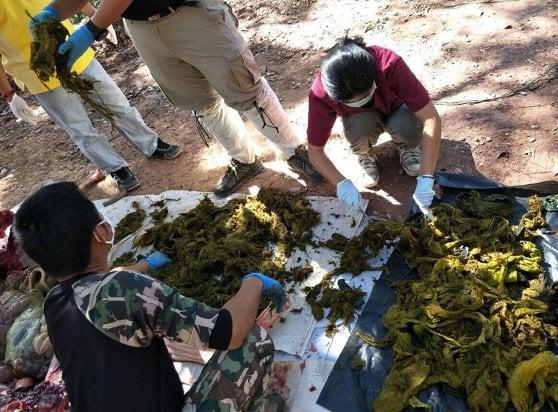 Thailandia, cervo trovato morto in un parco: sette chili di plastica nello stomaco