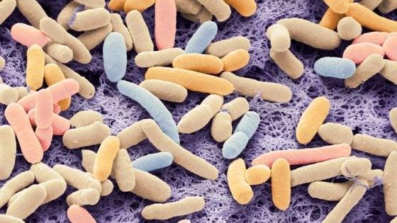 Quei batteri che mangiano CO2 e producono biocarburante