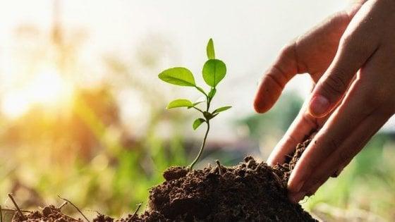 Per formare un 1 cm di suolo fertile servono dai 100 ai 1000 anni