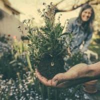 Il 2020 sarà l'anno internazionale della salute delle piante