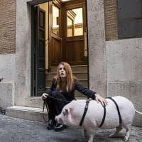 """L'onorevole Brambilla con un maialino davanti a Montecitorio: """"Una legge contro i..."""
