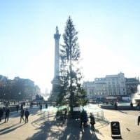 """Londra come Roma: l'albero di Natale a Trafalgar Square è """"spelacchiato"""""""