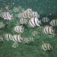 Sempre meno ossigeno negli oceani: a rischio la biodiversità